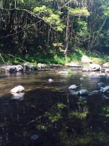 川のせせらぎ①